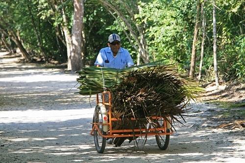 A man riding a bike at Coba in the Yucatan
