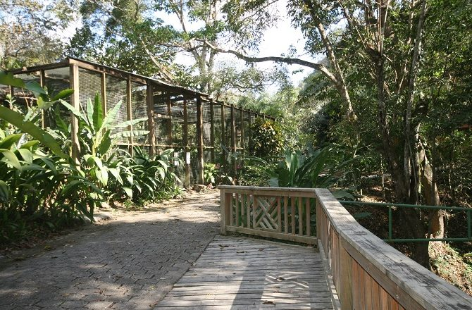 The walkway at Macaw Mountain Park in Copan