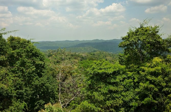 Views of the surrounding jungle at Caracol, Belize