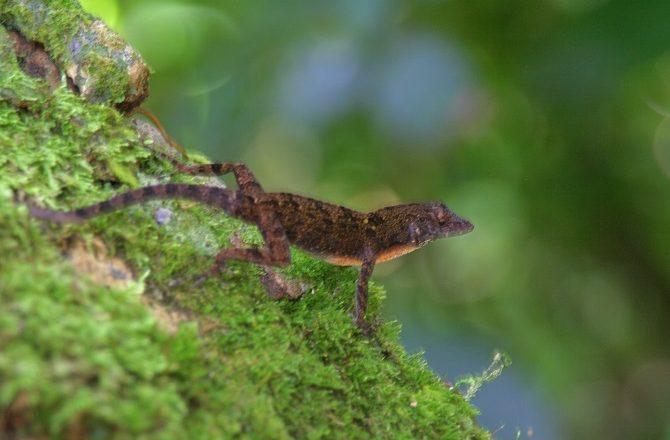 A lizard at Soroa Botanical Gardens in Cuba