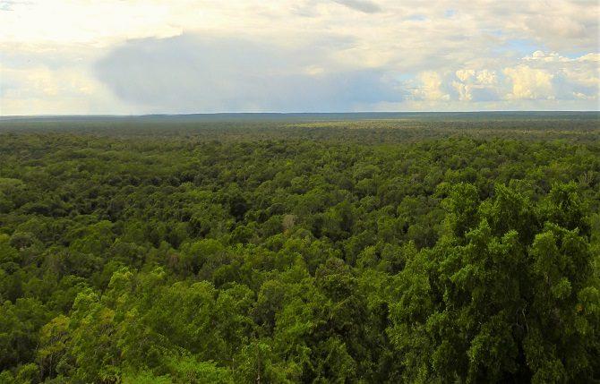The jungle surrounding the Mayan ruins at Calakmul