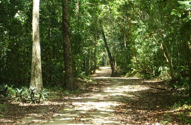 A footpath through the jungle at Tikal