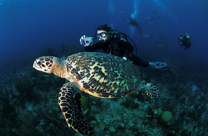 Turtle being followed by a scuba diver in Belize