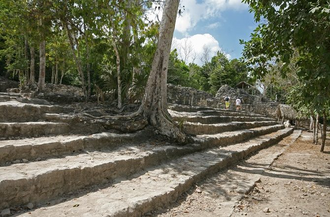 Tree growing through steps at Coba Mexico