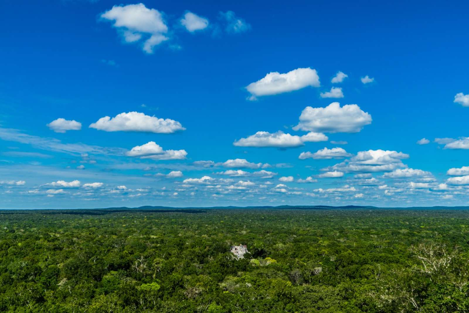 The jungle of Calakmul in Mexico