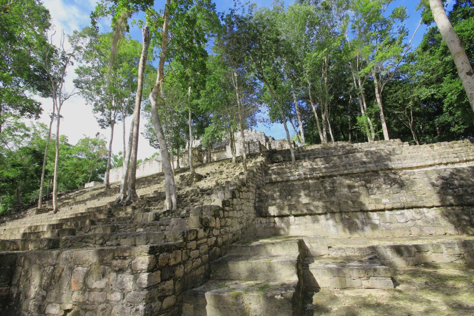 Trees growing through steps at Calakmul in Mexico