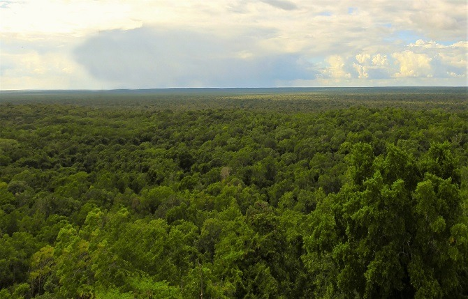 The jungle surrounding the Mayan ruins at Calakmul