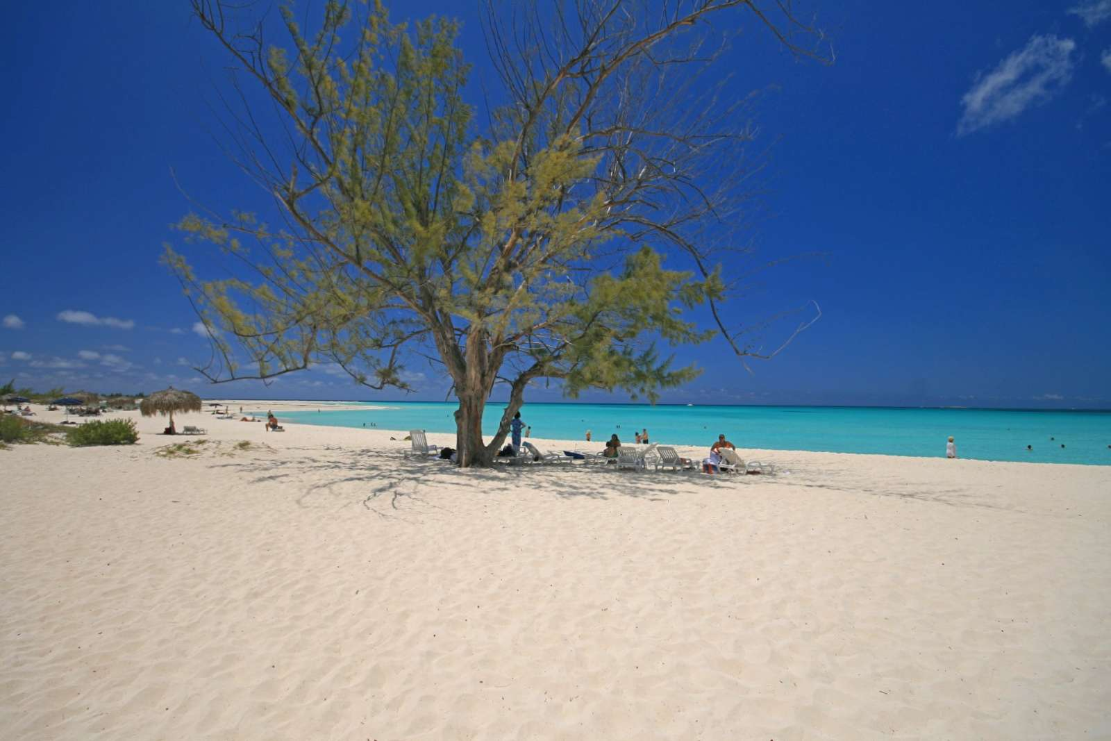 A solitary tree on the beach at Cayo Largo, Cuba