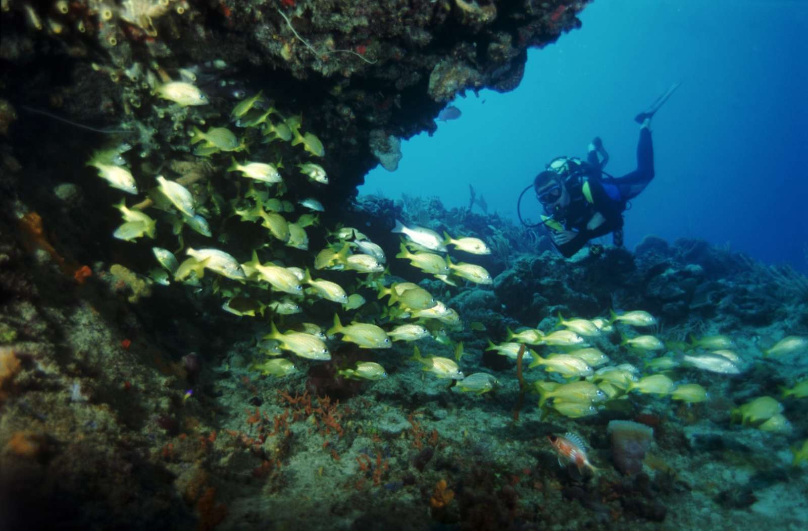 Scuba diving from Cayo Levisa, Cuba