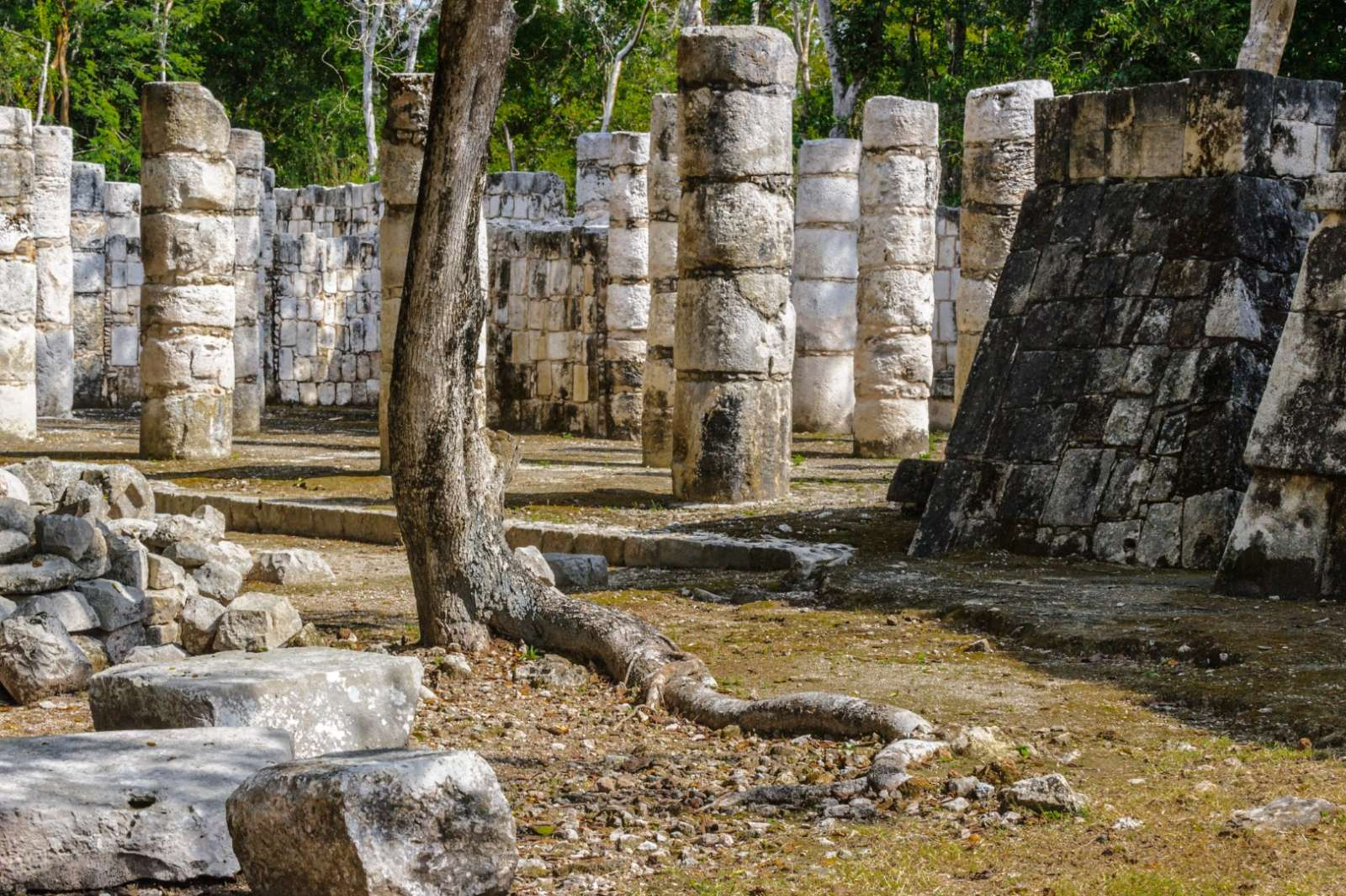 Columns and tree at Chichen Itza
