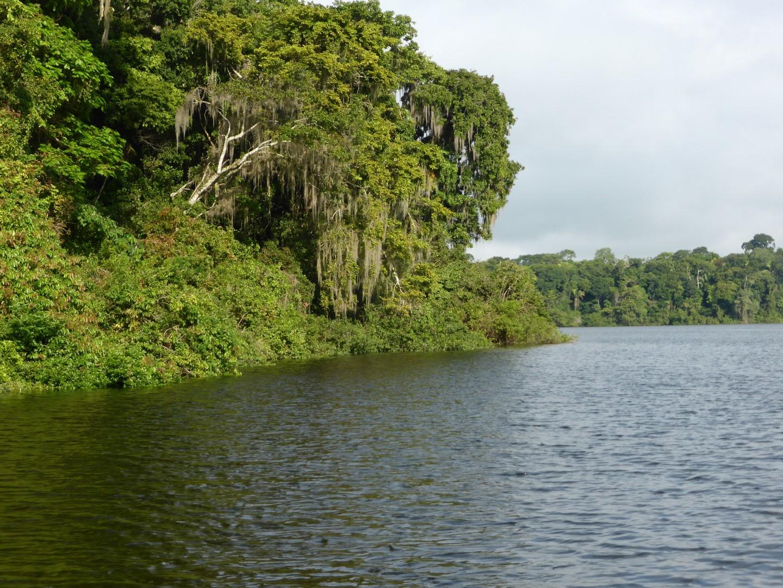 Jungle on Chiminos Island Lodge at Petexbatun