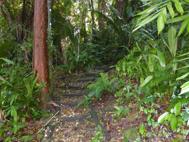 Path at Chiminos Island Lodge at Petexbatun