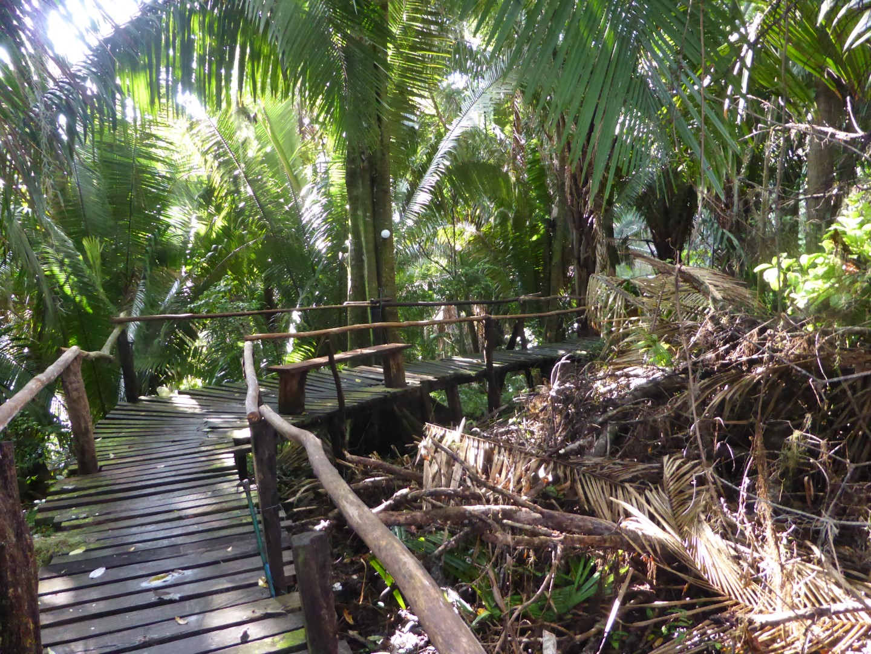 Wooden walkway at Chiminos Island Lodge at Petexbatun