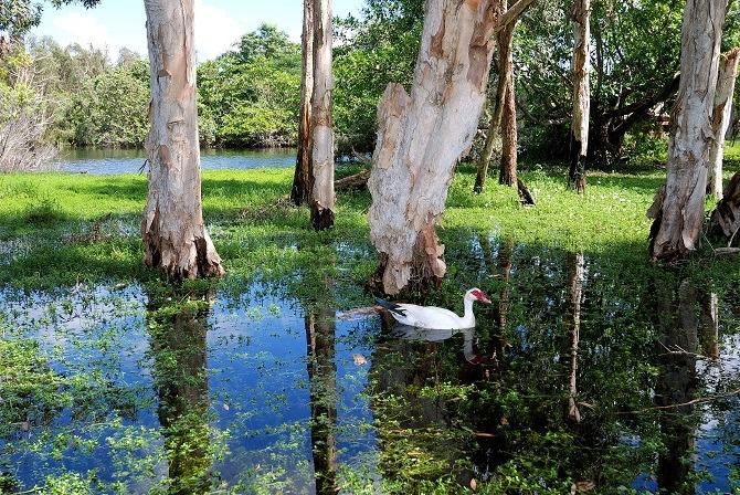 The lagoon at Guama in Cuba