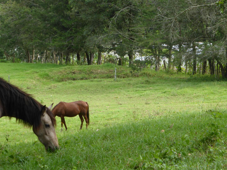 Horses at Hacienda Mil Amores in Ixil Triangle, Guatemala