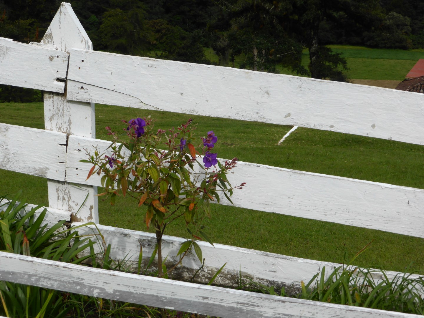 White fence with flowers at Hacienda Mil Amores in Ixil Triangle, Guatemala