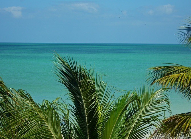 Holbox palm trees