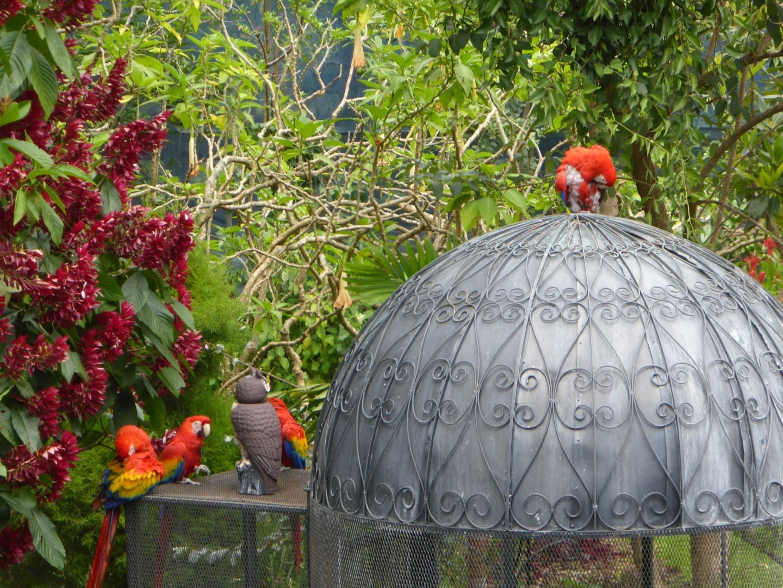 Parrots at Hotel Atitlan