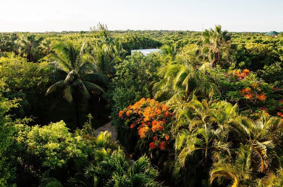 Aerial view of garden at Hotel Esencia