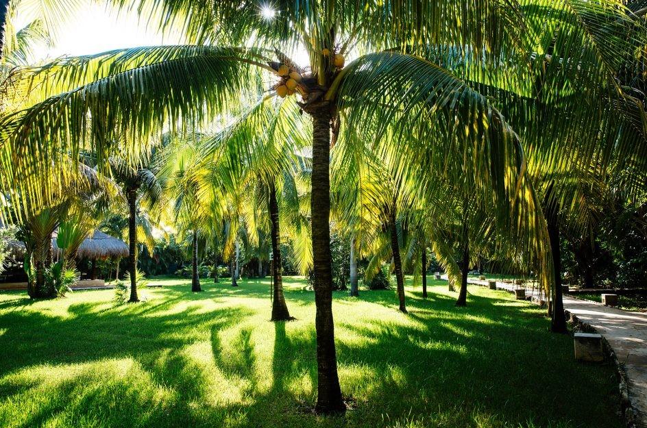 Palm trees in garden at Hotel Esencia