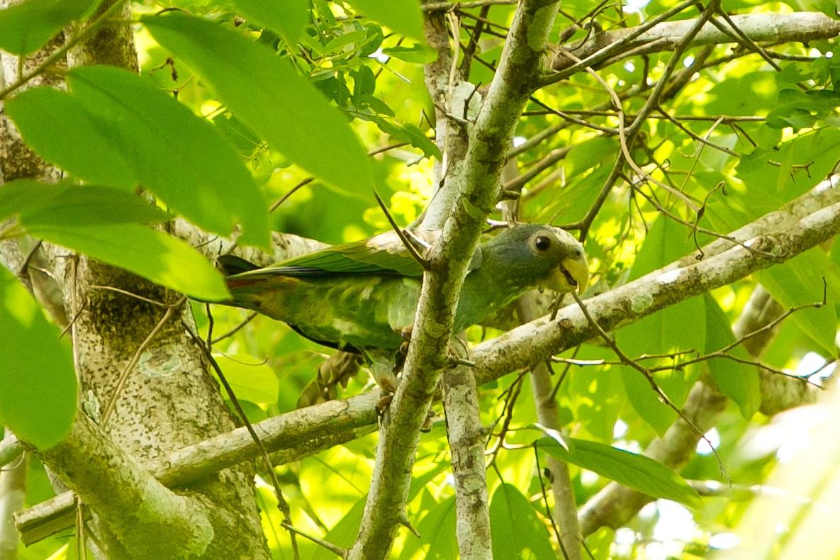Birdlife at Hotel Las Lagunas, Guatemala
