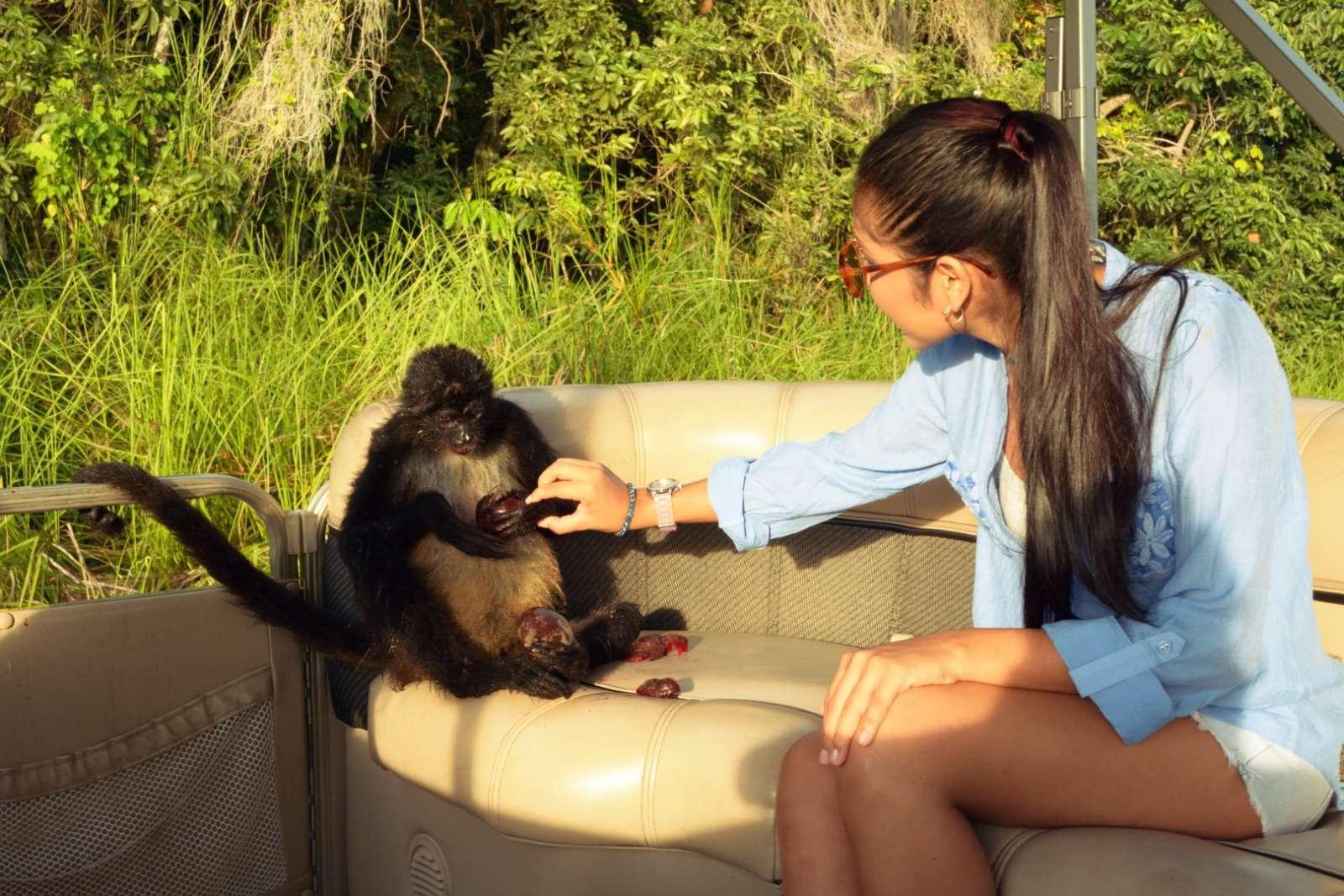 Monkey on boat at Hotel Las Lagunas, Guatemala
