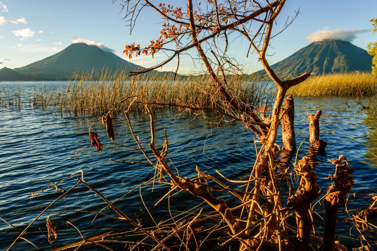 Tree in Lake Atitlan, Guatemala