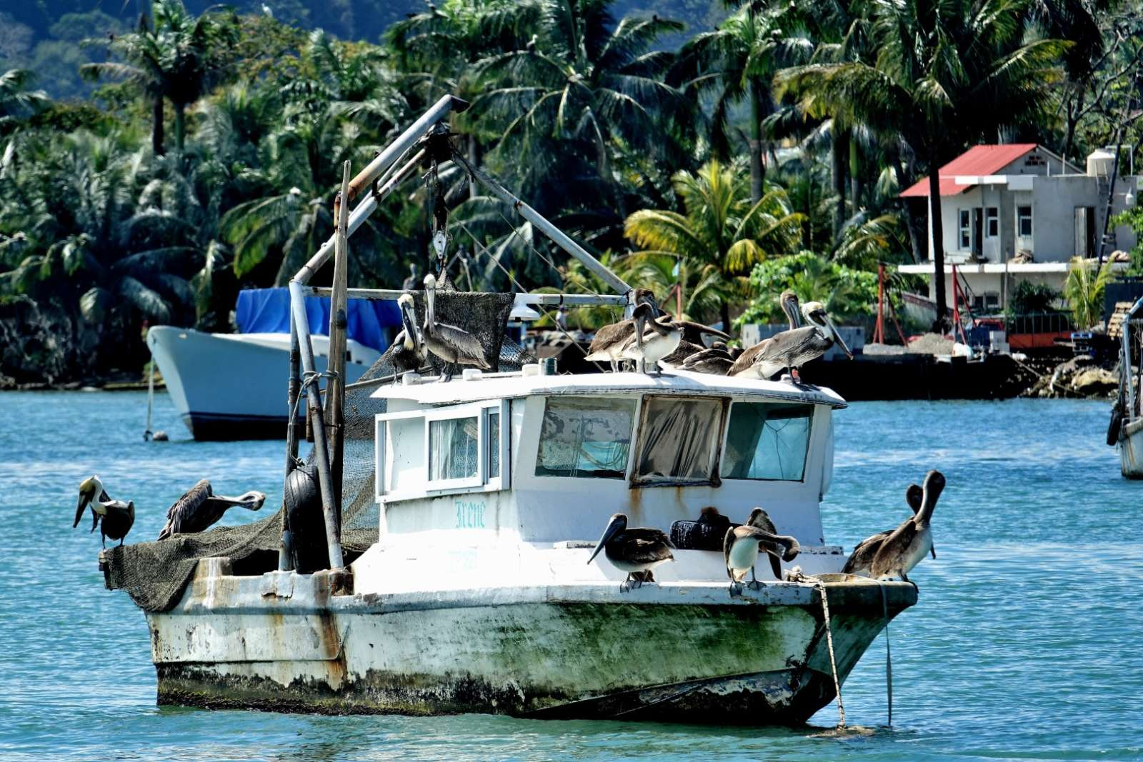 Boat with herons in the harbour of Livingston, Guatemala