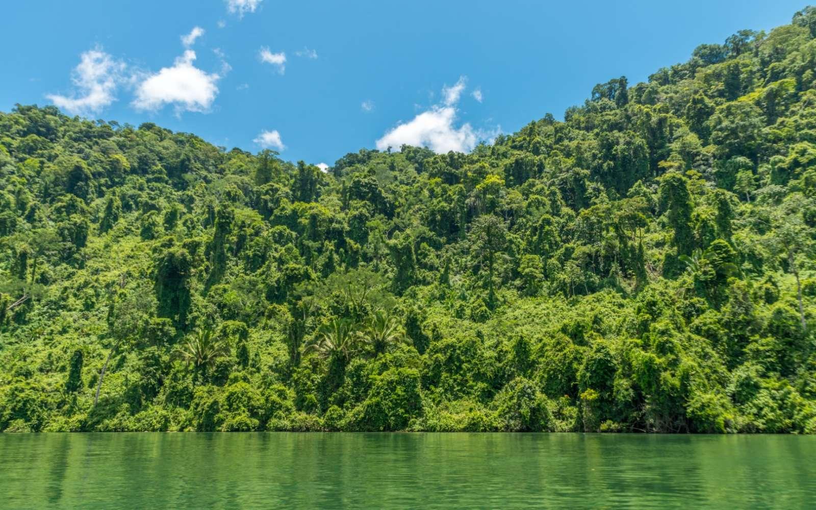 The banks of the Rio Dulce near Livingston, Guatemala