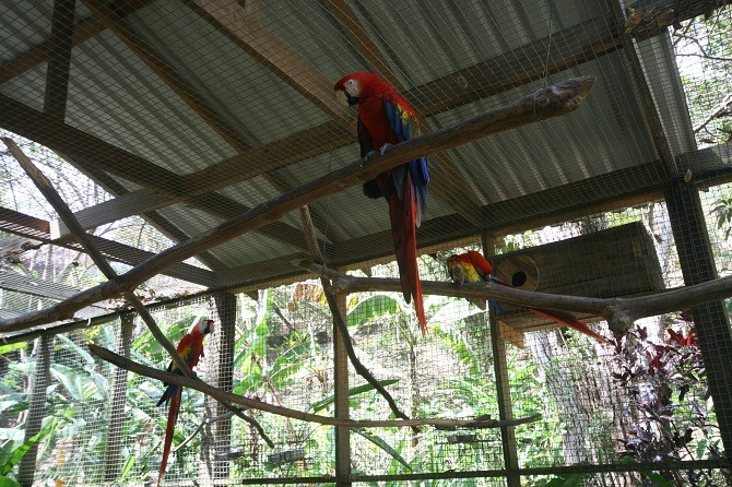 Bird enclosure at Macaw Mountain Park in Copan