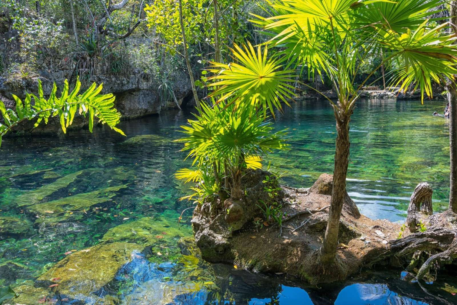 A beautiful cenote in the Yucatan Peninsula of Mexico
