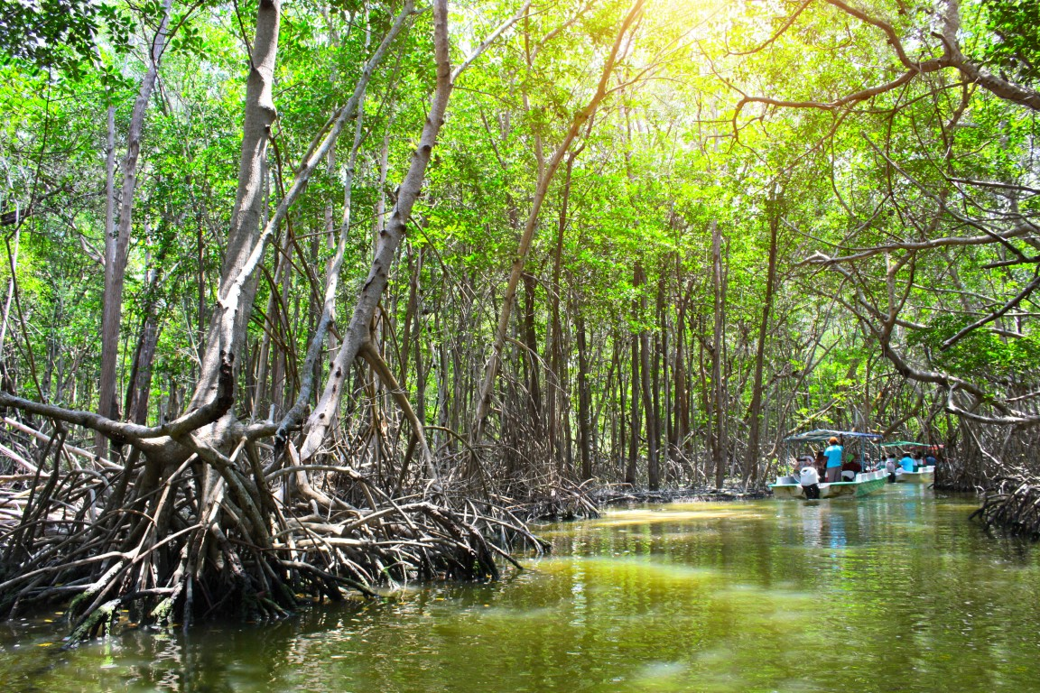 Boat trip on the mangrove at Celestun