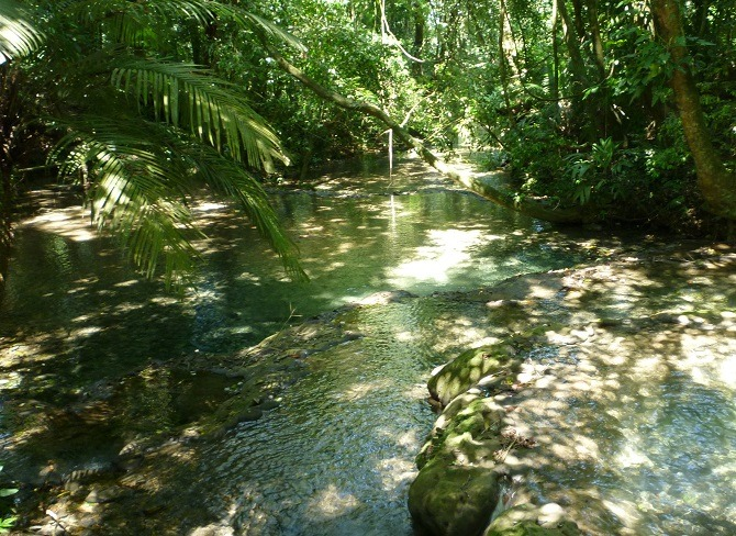 A stream running through the forest near Palenque