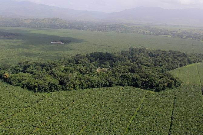 Aerial view Quirigua