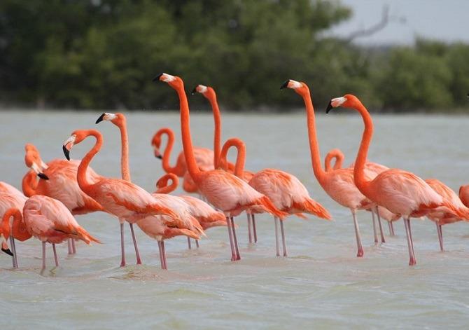 Flamingos at Rio Lagartos in Mexico