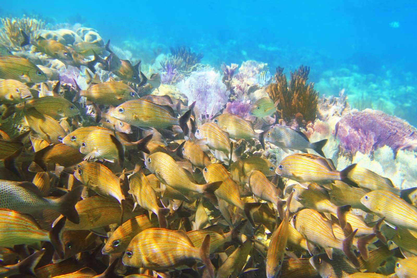 Scuba diving in the Riviera Maya Mexico