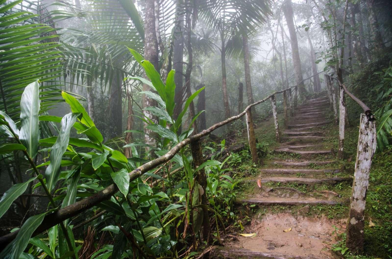 A trail in the Sierra Maestra Cuba