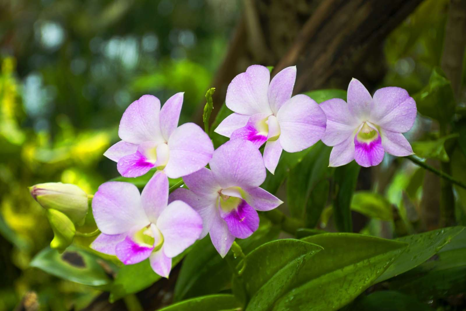 Orchids at Soroa Botanical Gardens in Cuba