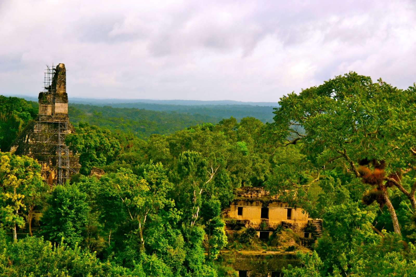 Dense jungle at Tikal, Guatemala