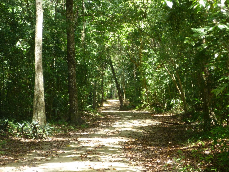 Pathway at Tikal, Guatemala