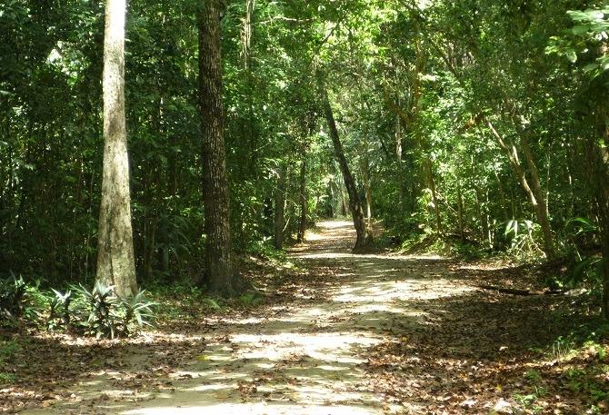 A footpath through the jungle at Tikal