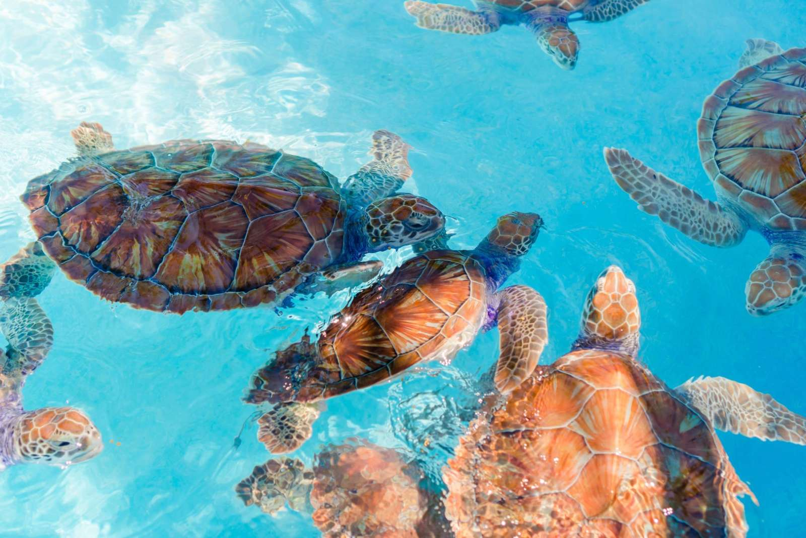 Turtles in Tulum, Mexico