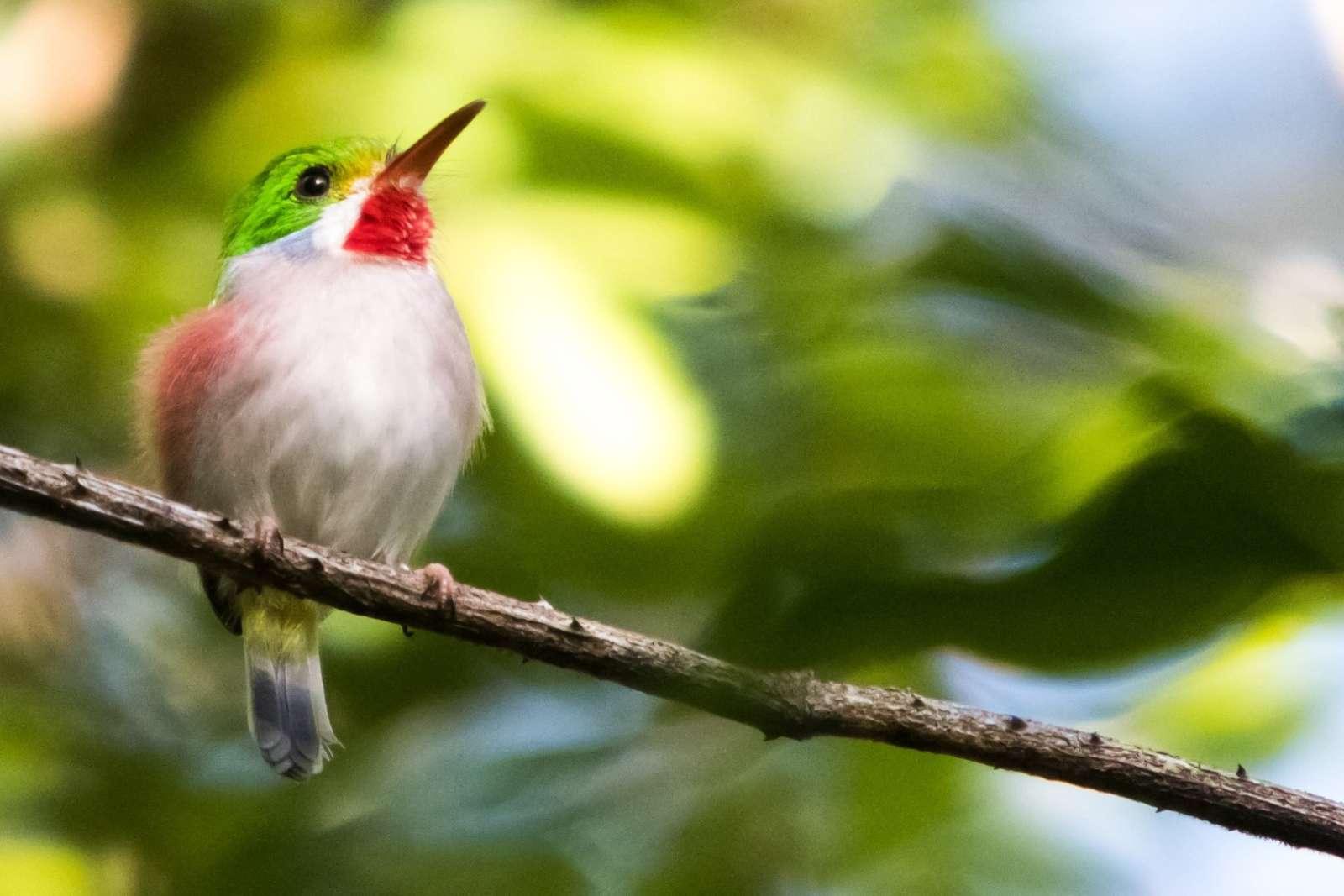 Vinales Cuba Bird