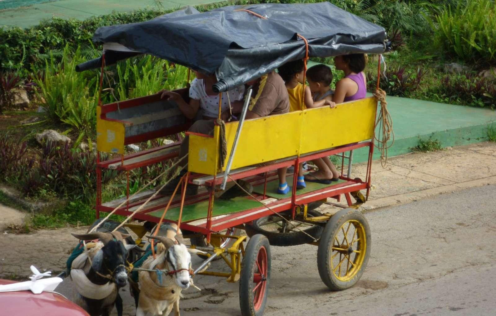 Vinales Cuba Goat Carriage