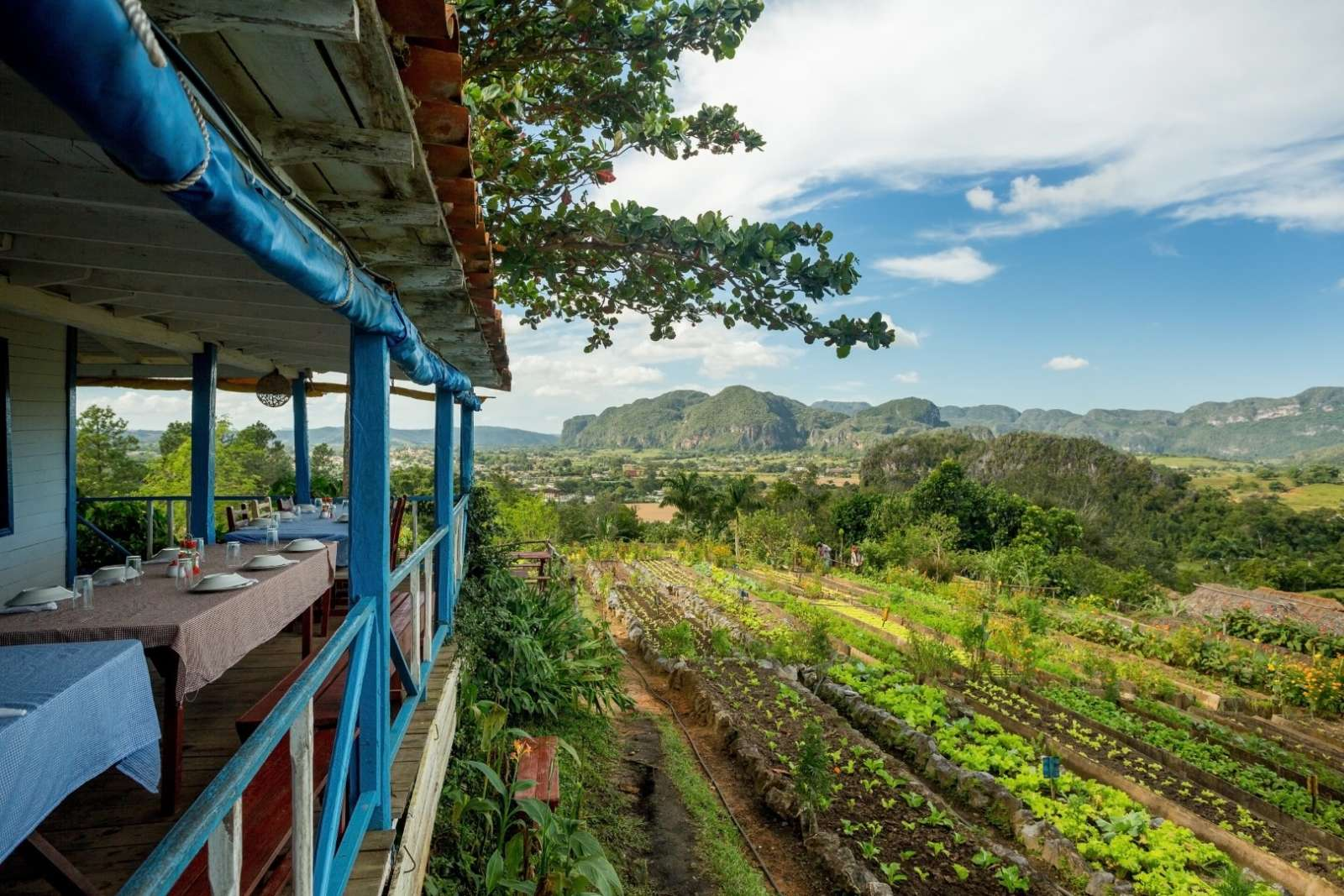 Organic farm and restaurant with a view in Vinales, Cuba