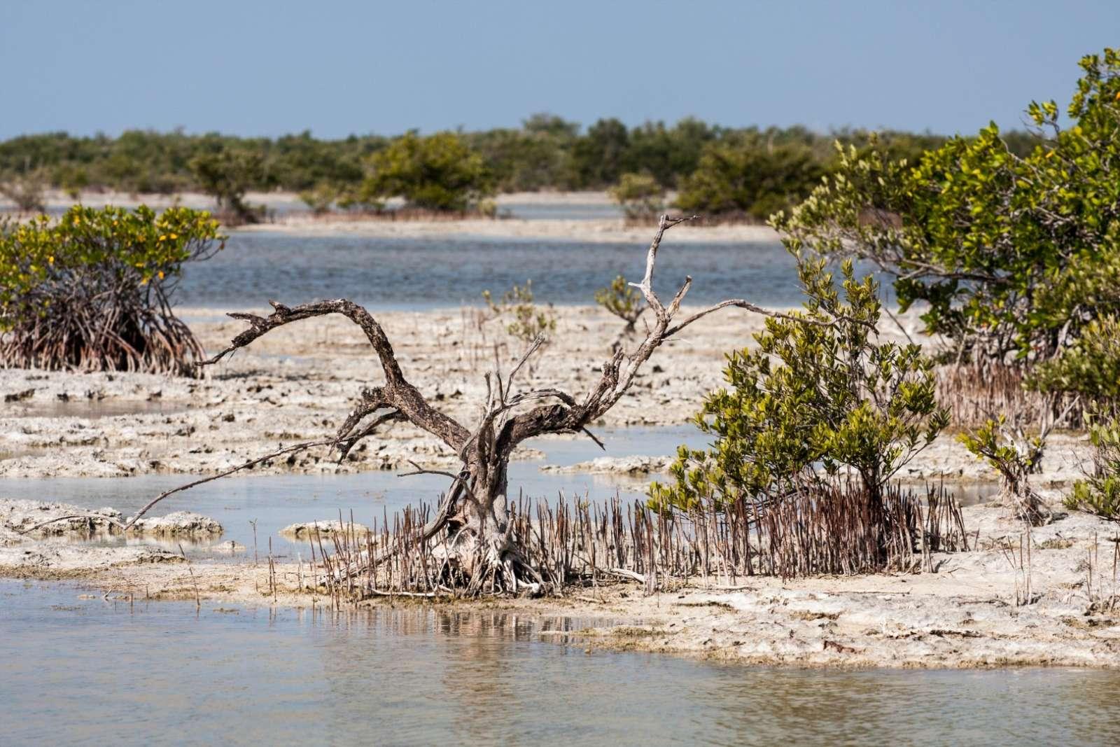 Zapata Peninsula Cuba Mangrove