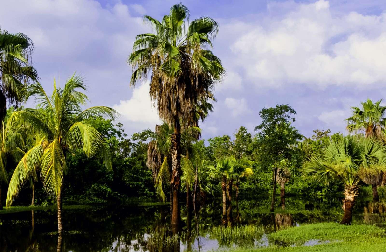 Mangrove swamp in the Zapata Peninsula of Cuba
