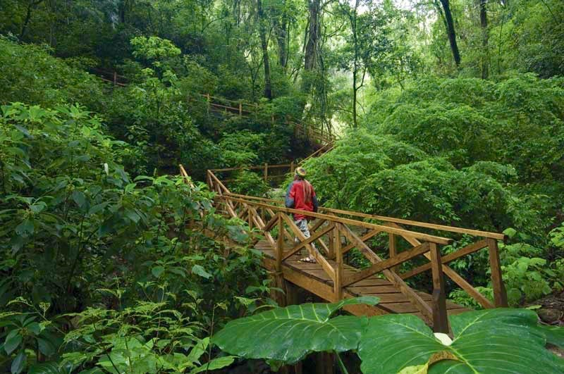 Nature trail leading to the Antigua glamping site