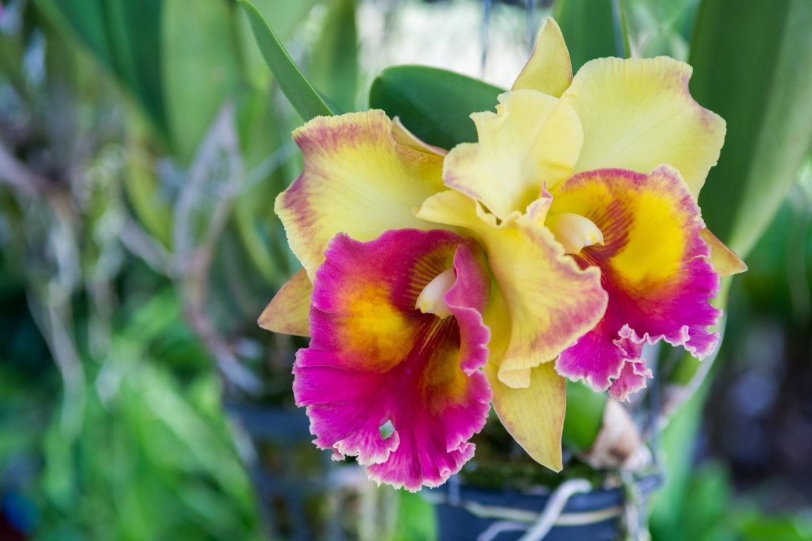 Visit to an orchid farm in Coban, Guatemala