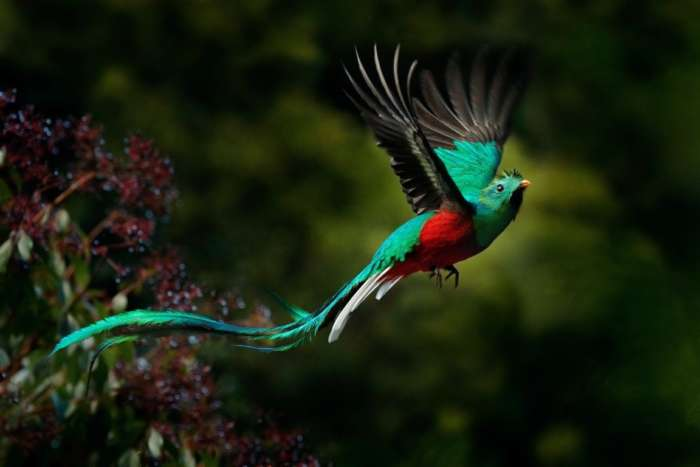 The Quetzal is the national bird of Guatemala